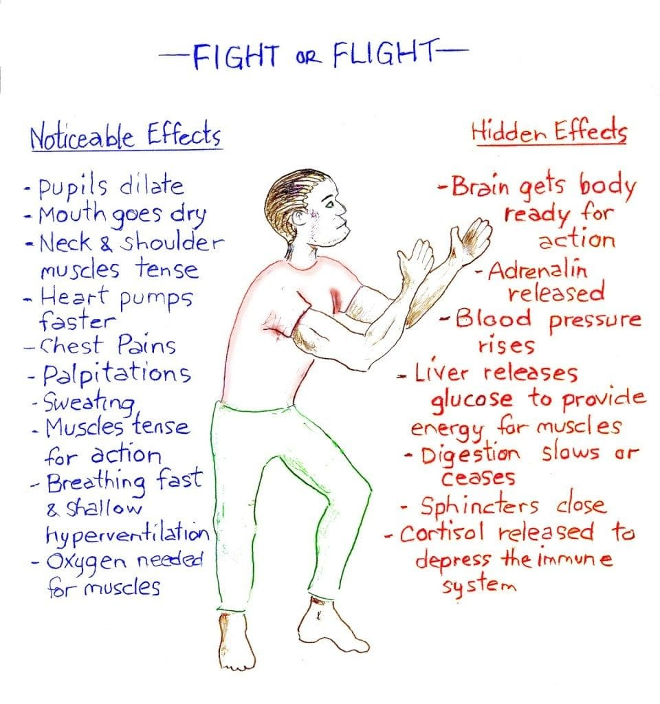 fight or flight infographic