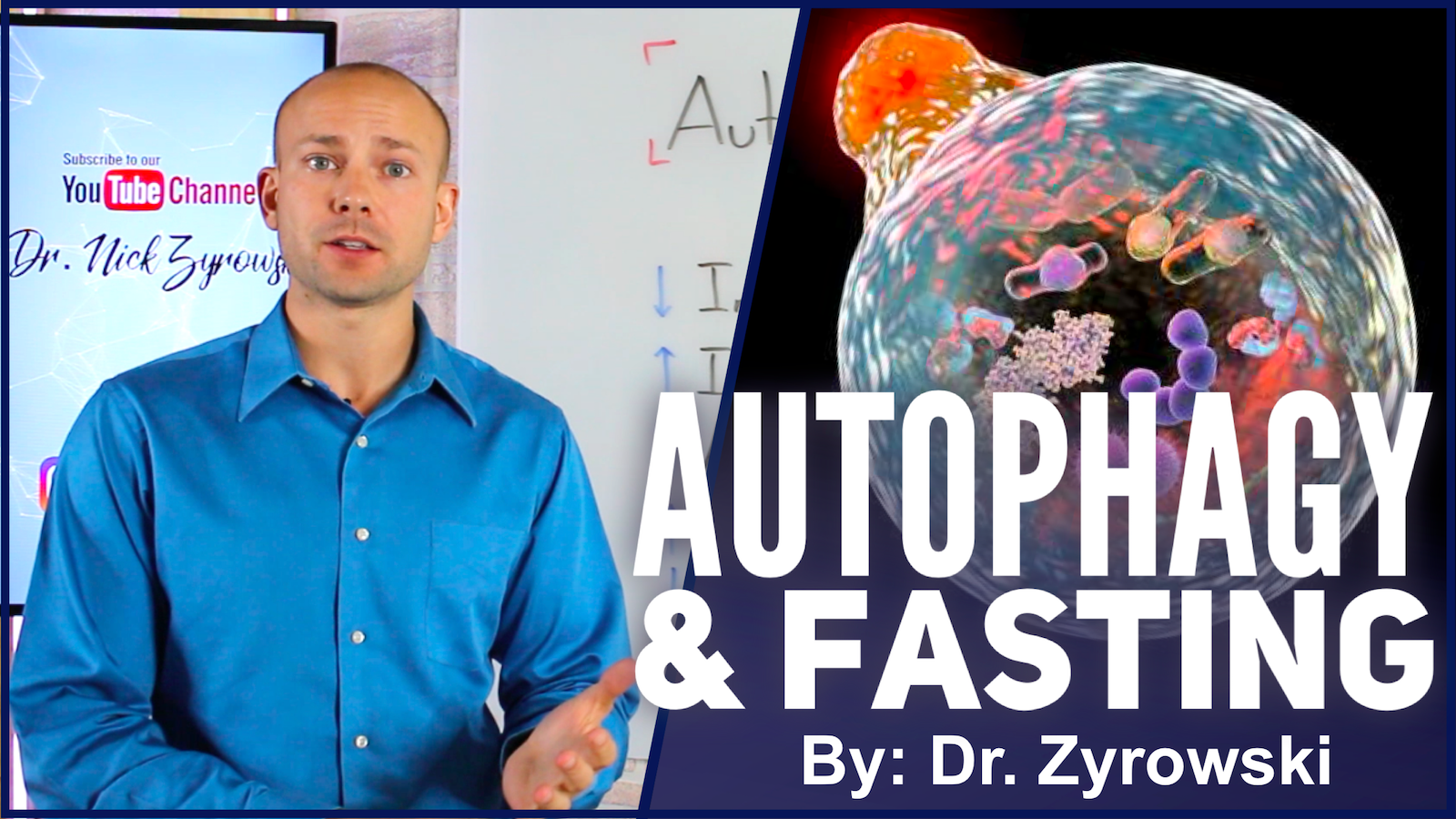 Autophagy And Fasting