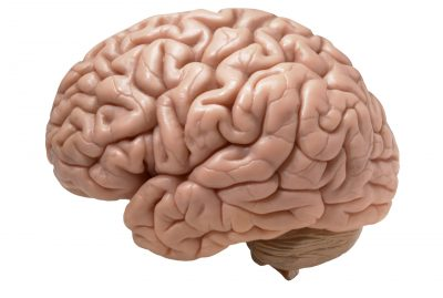 How to Detox Your Brain Naturally